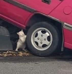 cat-respect-2